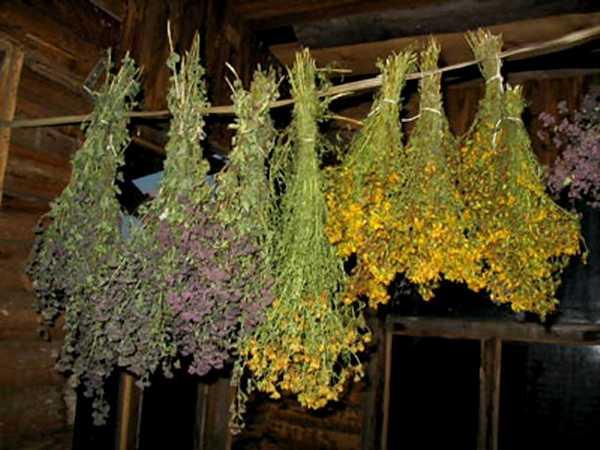 Веники из лечебных растений распространяют волшебный аромат и в сухом виде