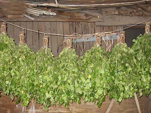 Сушат веники развешенными на жерди или веревке попарно