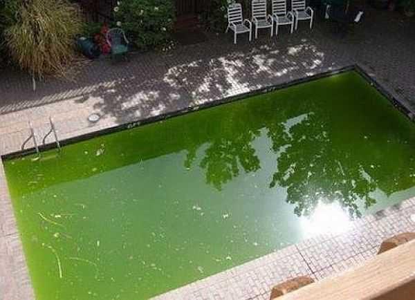 С позеленевшей водой нужно бороться специальными средствами: альбуцидами. Из других мер - препараты с активными кислородом, в частности - пергидролью. Но будьте осторожны: концентрацию превышать нельзя