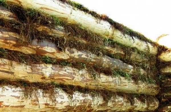 Так выглядит сруб, собранный на мох. Концы его подрезают, остатки заправляют в щели