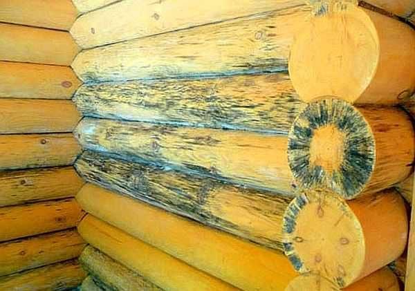При глубоком поражении просто шлифовкой не обойтись: два-три сантиметра древесины никто снимать не будет