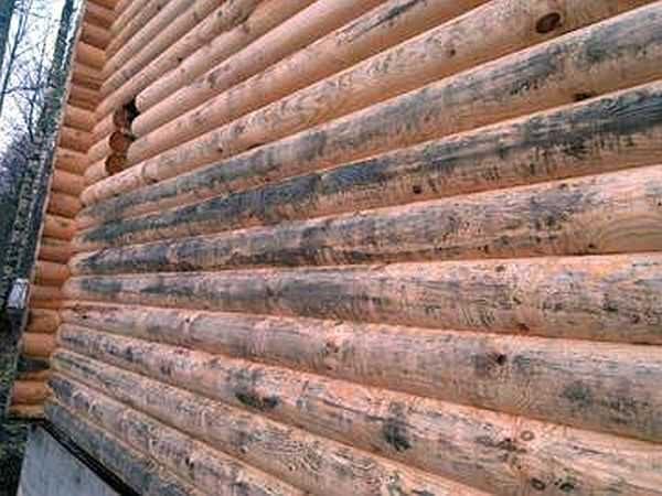 Синева древесины портит внешний вид
